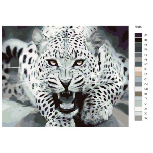 "Paint by Numbers ""Cheetah black"", 40x50cm,..."