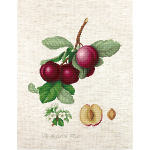 """Luca-s counted cross stitch kit """"The Nectarine..."""