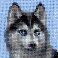 Riolis counted cross stitch Kit Husky, DIY